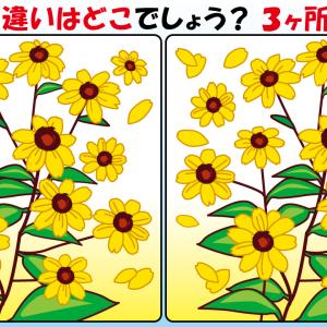 #41 お花のイラストで【間違い探し】