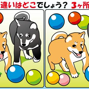 #45 柴犬のイラストで【間違い探し】