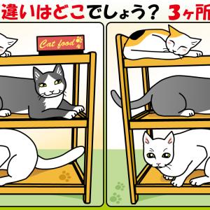 #46 猫のイラストで【間違い探し】