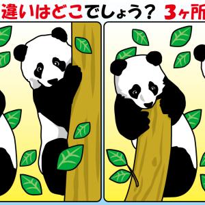 #47 パンダのイラストで【間違い探し】