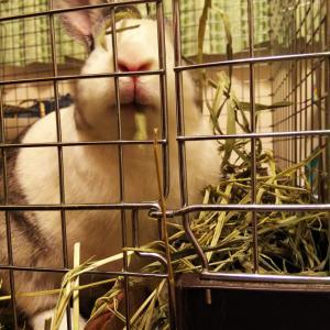 5ヶ月間のまとめ と 猫の脱走防止対策