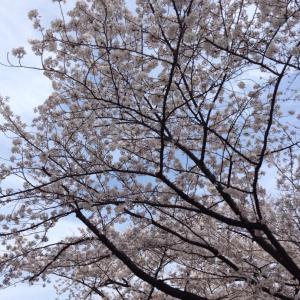 春と桜と 軌道修正