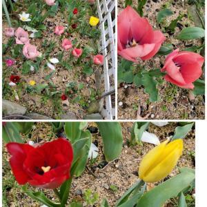 Flower( ᐢ˙꒳˙ᐢ )♡
