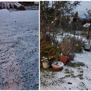 雪(゚ロ゚)