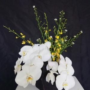 カナヤマートのさしみ定食 お花は胡蝶蘭