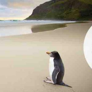<ANA特典旅行>ニュージーランド航空 減額マイルキャンペーン