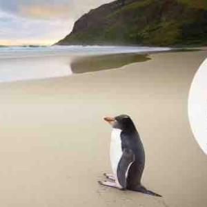 <ANA> ニュージーランド航空の特典旅行が30%オフ!