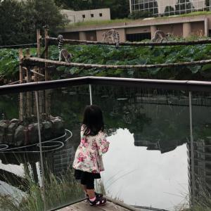 涼しくなったので丁度一年ぶりに上野動物園へ