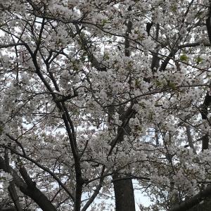 花で心癒されるも足早に通り過ぎる残念な春