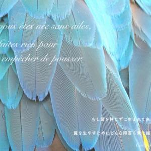 人生は自分で創造するもの。翼を授けてくれる名言