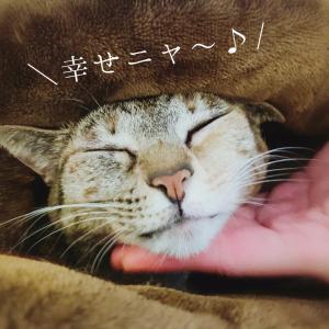 前編★人生に喜びを感じたいあなたへ〜金星12星座別好きなこと〜