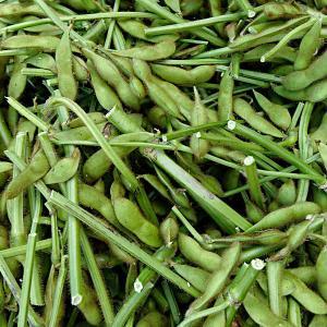 枝豆の収穫・・・・