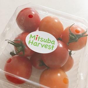 プチトマトでリコピン接種(笑)