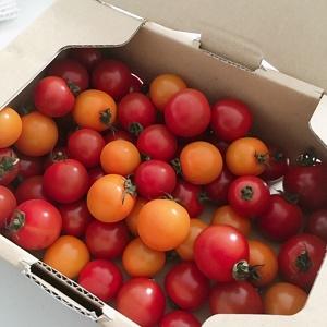 風邪予防にトマト!
