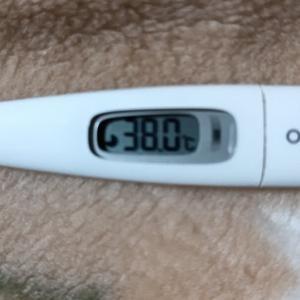38℃まで上がりました
