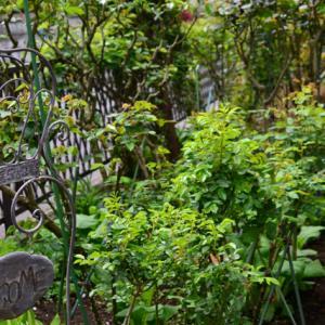 緑いっぱいの庭となりました!