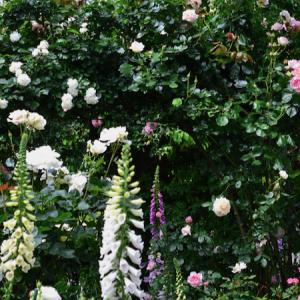春の薔薇回想シーン 2021