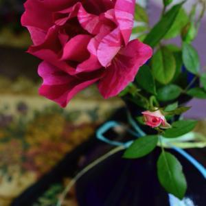 花遊び ー French Rose Guy Savoy