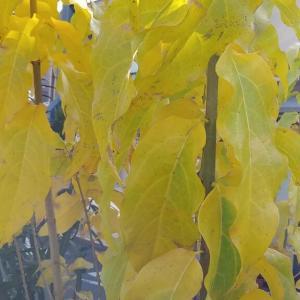 見ただけで元気になる黄色い葉っぱ