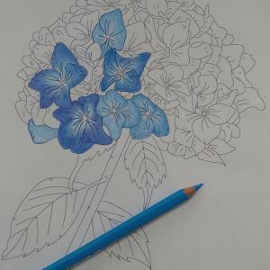 紫陽花ぬり絵のスタート