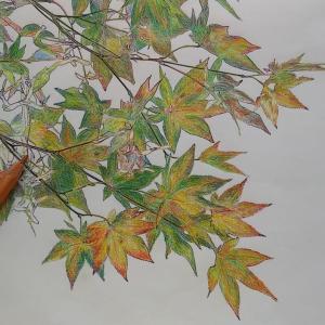 楓のぬり絵、続き。