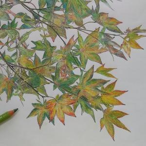 楓のぬり絵、うぅ…続き。