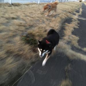 【山梨県のペットシッター】犬猫の健康長寿を考える2