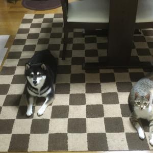 【山梨県のペットシッター】犬の掃除機嫌いは社会化不足?とお知らせ