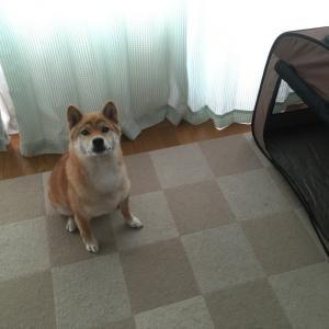 【山梨県のペットシッター】犬のケージ届きました