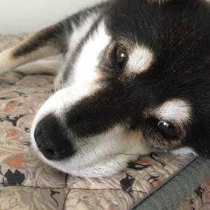 【山梨県のペットシッター】長生きの秘訣?犬の介護と介助