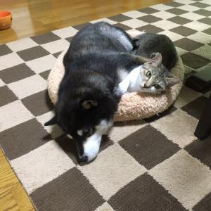 【山梨県のペットシッター】犬と猫の戦い