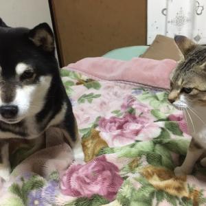 【山梨県のペットシッター】猫の散歩について
