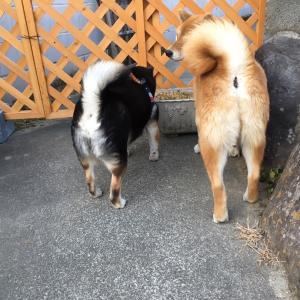 【山梨県のペットシッター】犬アレルギー、猫アレルギー