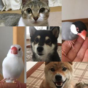 【山梨県のペットシッター】未来を予測する愛犬・愛猫生活