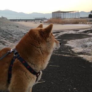 【山梨県のペットシッター】キャリア猫ちゃんとのお付き合い