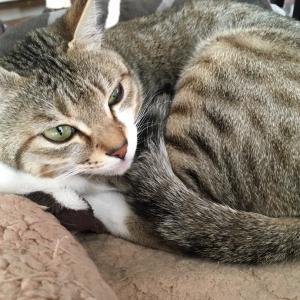 【山梨県のペットシッター】犬猫が丸まる季節