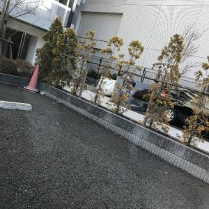 初  小田原へ(≧∇≦)