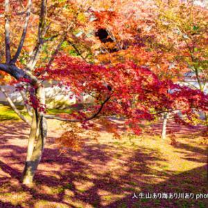 冬の初めに京都紅葉散策
