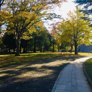 きっと今が見頃の茨城県歴史館の銀杏並木