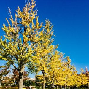 秋色の茨城県近代美術館