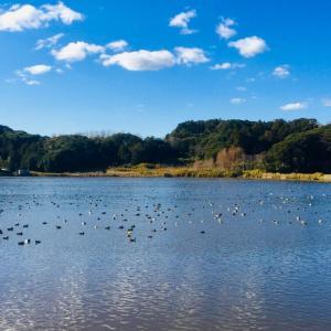 よく晴れた日の池