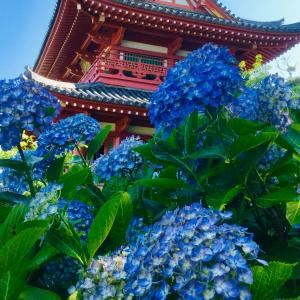 花の寺 潮音寺