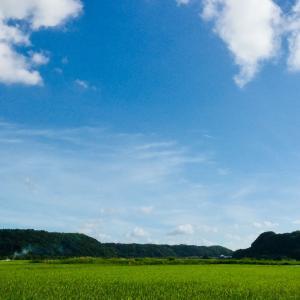 夏の景色 水田