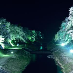 2014 桜 その25 「うぐい川の夜桜」