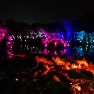 「チームラボ 栗林公園 光の祭」に行ってきました。その2