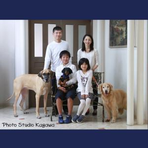家族四人とワンちゃん三匹物語(ストーリー)