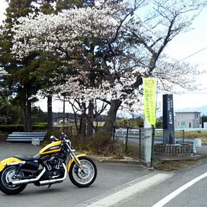 2019/04/15 恐怖の強風!花見のチョイ走り