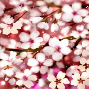 桜の季節にはいつも…