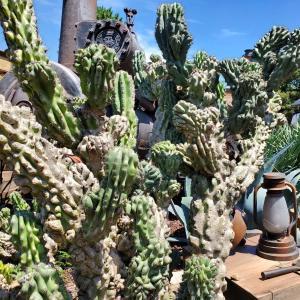 ディズニーランドに植物見学に行ってきたぞ2020年夏【後編】
