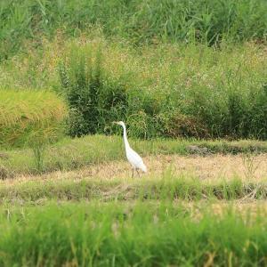 田園風景の中の鳥